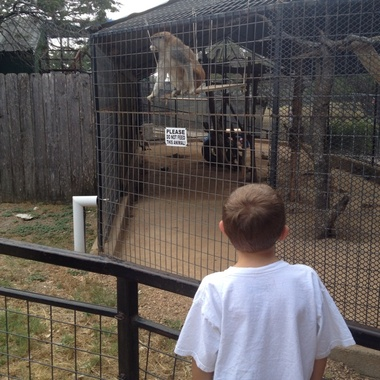 Austin Zoo